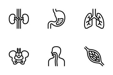 Anatomy Icon Pack