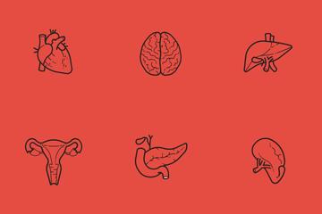 Human Anatomy Icon Pack
