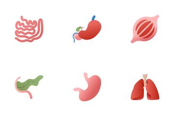 Realistic Human Internal Organs Icon Pack