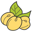 Apricot Fruit Healthy Diet Icon