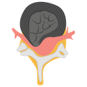 Brain With Spinal Spinal Cord Anatomy Neurology Icon