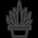 Cactus Plant Succulent Bowl Cactaceae Plant Icon