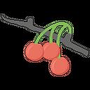 Cherries Berries Trees Garden Cherries Icon