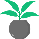 Chinese Evergreen Icon
