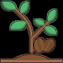 Coffee Plant Food Coffee Tree Plant Icon