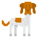 Danish Pointer Dog Icon