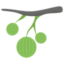 Gooseberries Icon