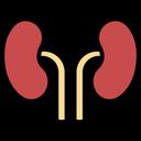 Kidneys Icon