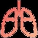 Lungs Organ Human Icon