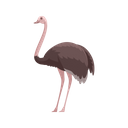 Ostrich Bird Emu Icon