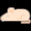 Science Lab Rat Icon