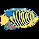 Regal Fish Angelfish Ocean Icon