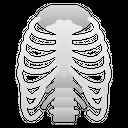 Ribs Human Organ Icon