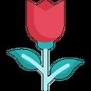 Rose Flower Blossom Icon