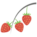 Strawberry Plant Bunch Of Strawberries Fruit Icon