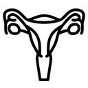 Uterus Human Organ Icon