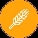 Wheat Grain Harvest Icon