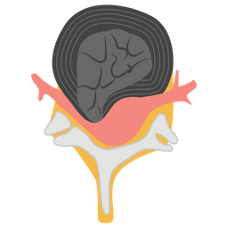 Brain With Spinal Icon