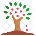 Abundance Tree Plentifully Icon
