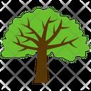 Acacia Tree Icon
