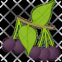 Acai Berry Icon
