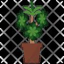 Aeonium Potted Plant Icon