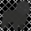 Affenpinscher Dog Breeds Dog Species Icon
