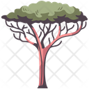 Africa Tree Tree Branch Icon