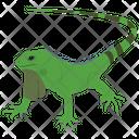 Agamidae Lizard Icon