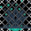 Agave Plant Alovera Icon