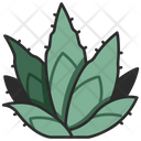 Agave Cactus Plant Icon