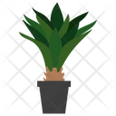 Agave Evergreen Plant Icon