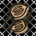 Ajwain Icon