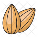 Almond Dry Fruit Icon