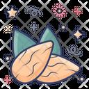 Almonds Edible Nut Dry Fruit Icon
