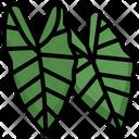 Alocasia Icon