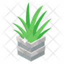 Aloe Plant Icon