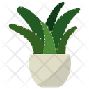 Aloe Potted Plant Icon