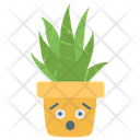 Aloe Vera Jade Plant Succulent Plant Icon