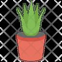 Aloe Vera Green Plant Herbaceous Plant Icon