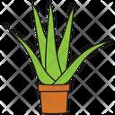 Wild Plant Cactus Succulent Icon