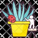 Aloe Vera Plant Agave Icon