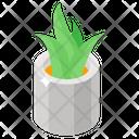 Aloe Vera Evergreen Succulent Icon