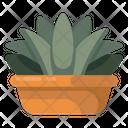 Aloe Vera Cactus Plant Agave Pot Icon