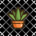 Aloe Vera Aloe Plant Icon