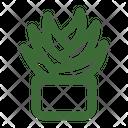 Aloe Vera Plant Succulent Icon