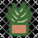 Aloe Vera Succulent Aloe Icon
