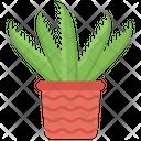 Aloe Vera Plant Cactus Icon