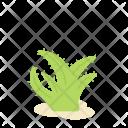 Aloevera Aloe Flower Icon