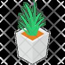 Aloe Vera Plant Icon